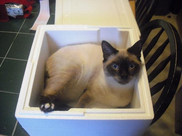 Juliet In Elis Box