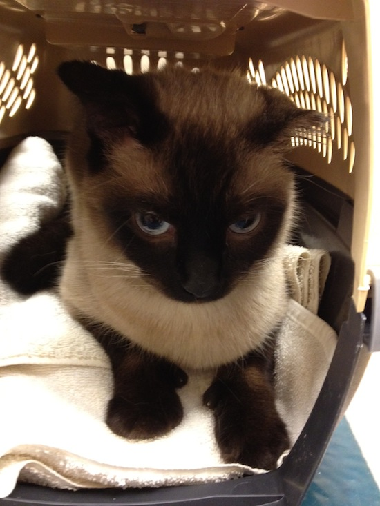 Wordless Wednesday - Jules In The Carrier Going To Vet