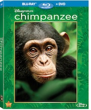 Disney Chimpanzee Small