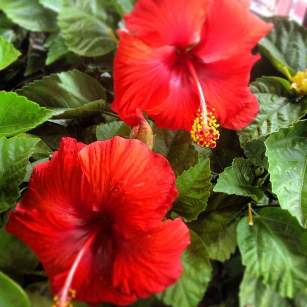 Wordless Wednesday - flowers