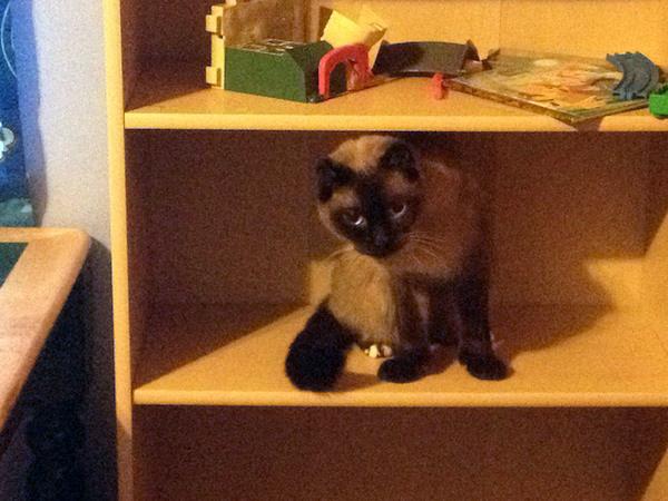 #WW With #Linky – The Cat On The Shelf