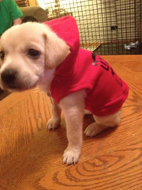 Dobby in his Hoodie