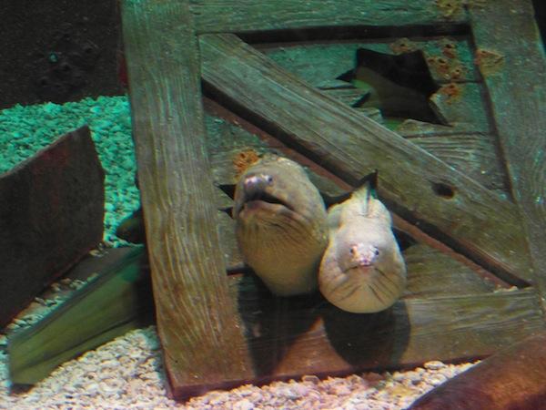 Mystic Aquarium, Mystic CT