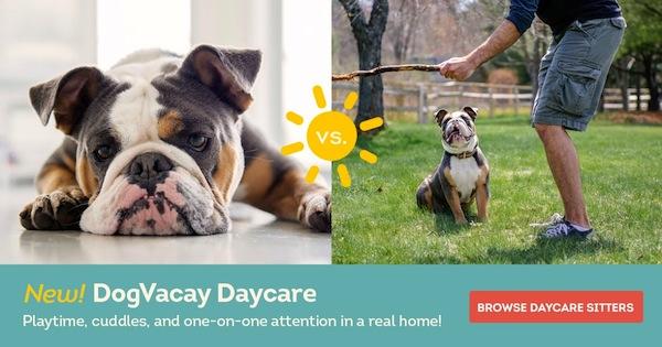 DogVacay Daycare