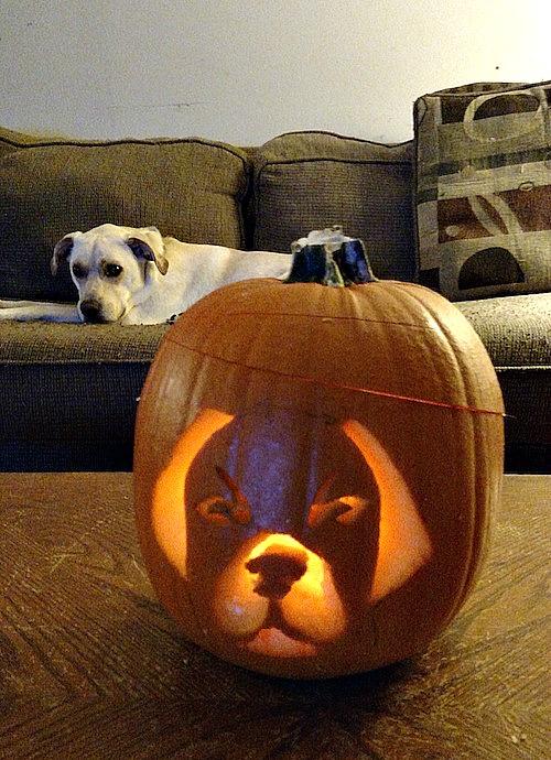How To PETrify Your Pumpkin #PurinaPetrified