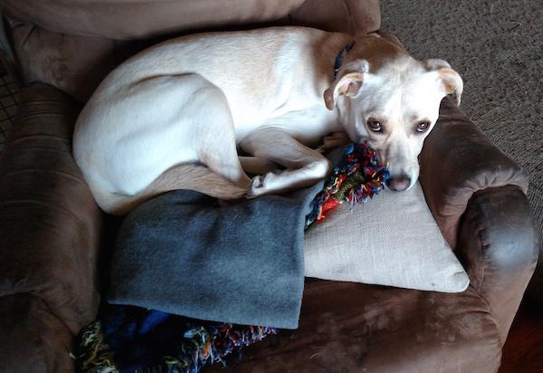 Dobby in rocking chair