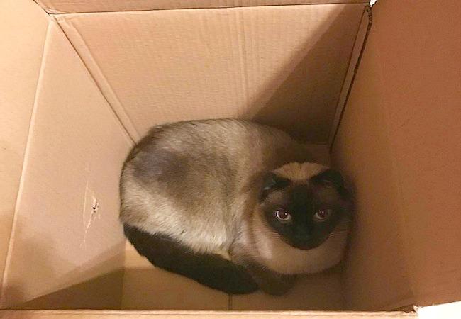 Jules in box