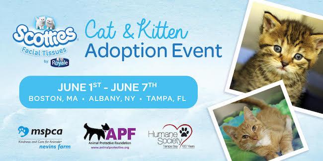 Scotties 2017 Cat & Kitten Adoption Event