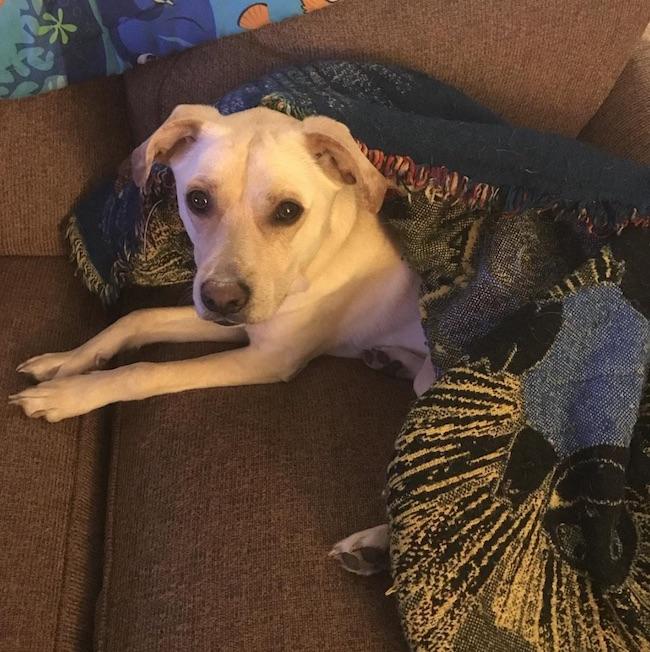 Dobby under blanket