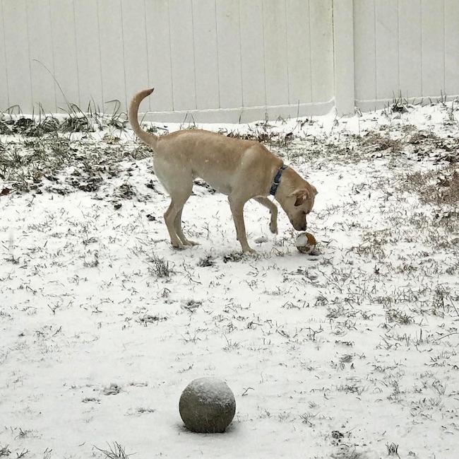 Dobby snow
