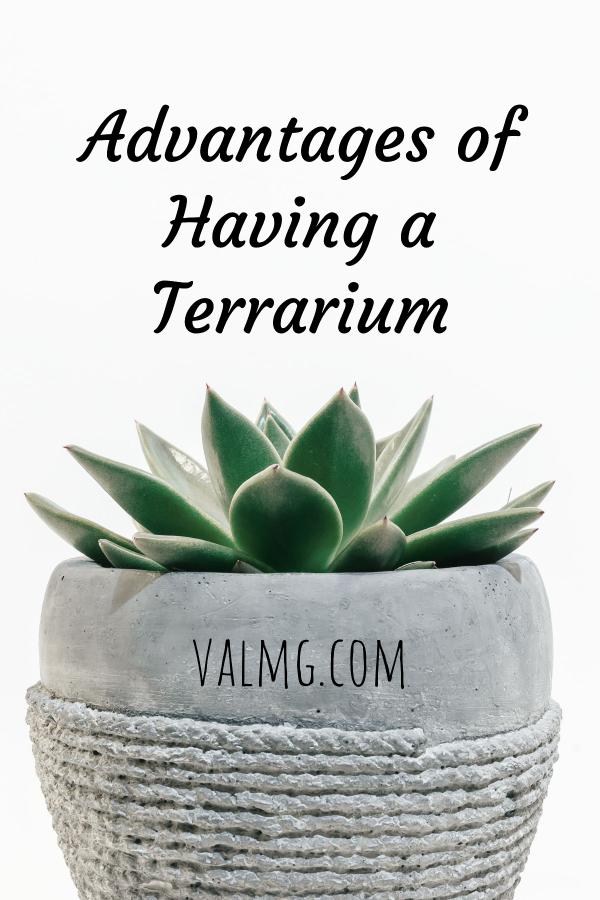 Advantages Of Having A Terrarium